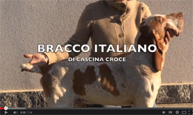 video bracco italiano